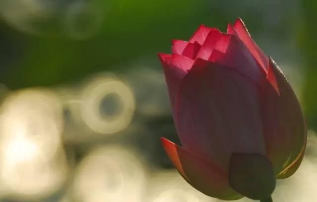 當你不再證明自己時,美就綻放了